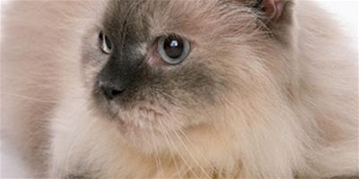 貓咪尾巴豎起來表示什麼意思?