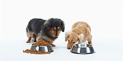 狗狗美食廚房-南瓜雞肉飯