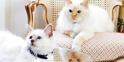 貓咪維生素缺乏症有什麼表現,如何治療維生素缺乏症