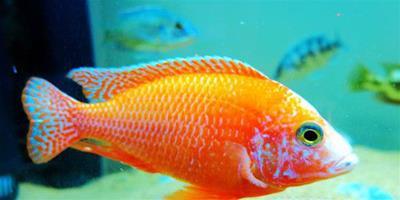 魚病防治 魚病防治需結合養殖技術預防