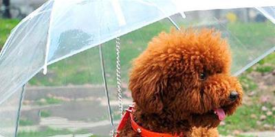 狗狗雨季必備,你都知道哪些?