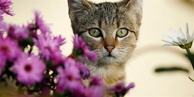 貓咪一定要定期吃驅蟲藥嗎