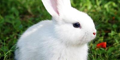 養兔怎麼做好降溫措施