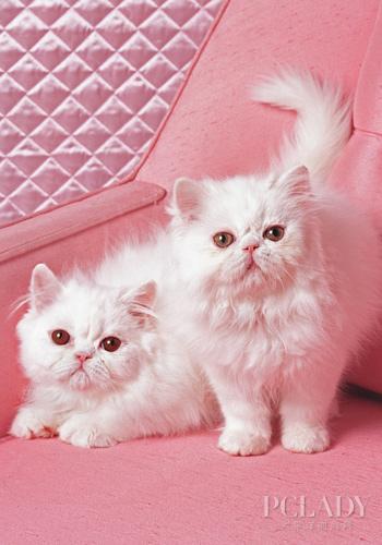 母猫为何吃自己刚生的小猫 爱宠物咨询网