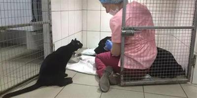 一切都會沒事的!癱瘓貓咪化身醫生用呼嚕安慰生病狗狗!