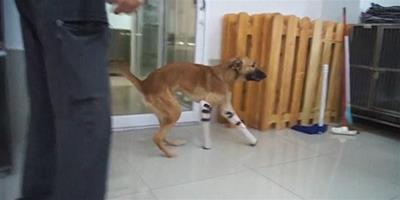 寵物狗因咬鄰居鞋被切去前腿 鄰居獲刑一個月