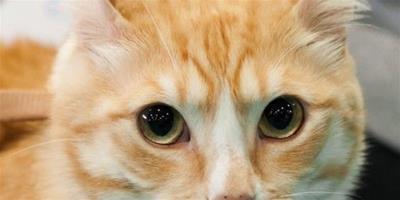 貓咪打扮有助於健康