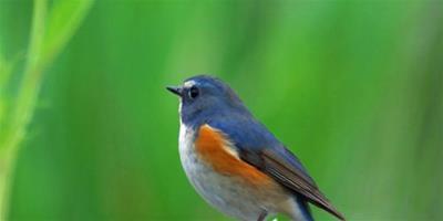 鳥類動物的一些新奇事