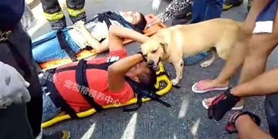 主人車禍受傷家裏的愛犬馬上趕到他身旁,接著它超萌舉動讓人泛淚