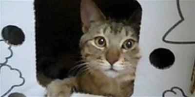 貓咪流行紙盒屋