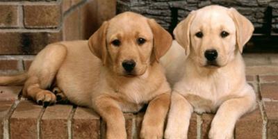 怎麼知道狗狗生氣?如何判斷?