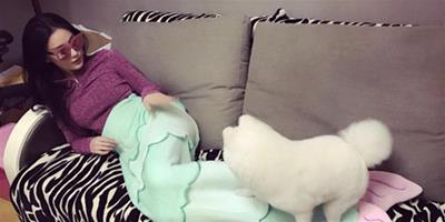 張馨予躺沙發扮美人魚 寵物狗實力搶鏡