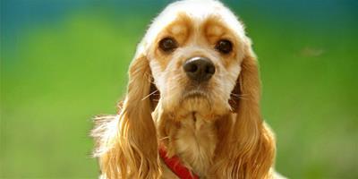 寵物狗患上鼻炎怎樣治療