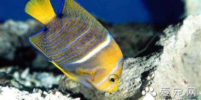 生石灰 魚使用生石灰需要注意的事項