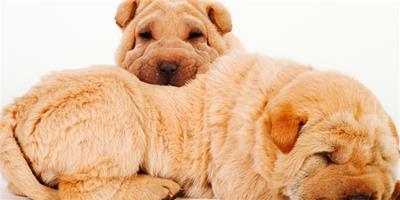 訓練狗狗站立的分解動作