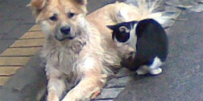 回家路上遇受傷流浪狗,給了它根火腿,它的做法讓人淚流滿面
