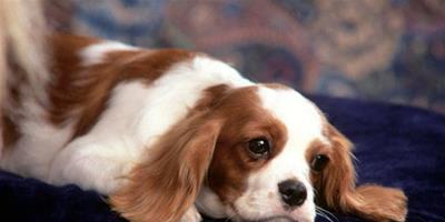 狗狗喜歡什麼音樂 飼主的關心很重要