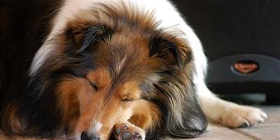 狗狗厭食如何預防呢