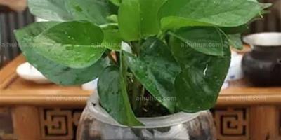水培植物技巧
