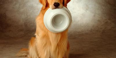 金毛犬不能吃什麼