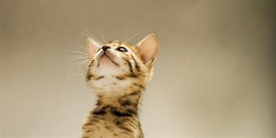 教你想法搞定貓咪的壞脾氣