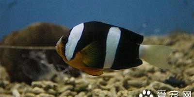 高錳酸鉀 魚使用高錳酸鉀的作用及使用方法