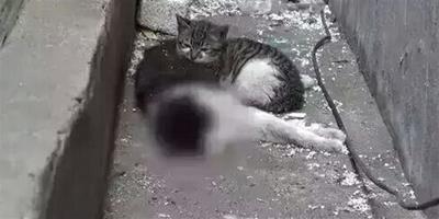 小貓經歷此事後,竟會流淚
