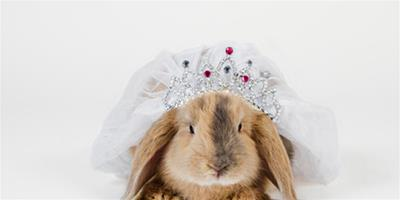 挑選寵物兔兔十個觀察要點