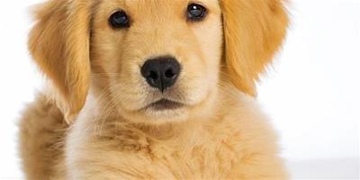 狗狗老是拉稀什麼原因?怎麼辦?
