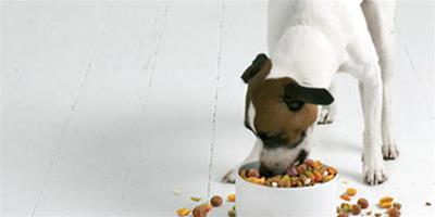 給狗狗安全換狗糧的小常識