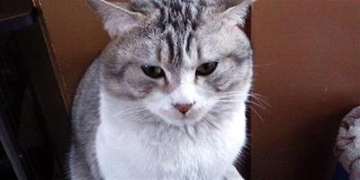如何梳理貓咪毛髮?貓咪毛髮梳理注意些什麼呢