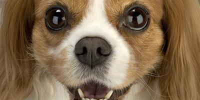狗狗也要用牙線