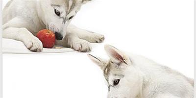 狗狗吃水果有什麼好處