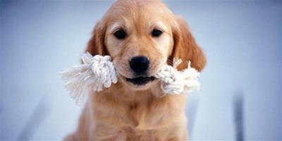 寵物食物中毒的症狀有哪些
