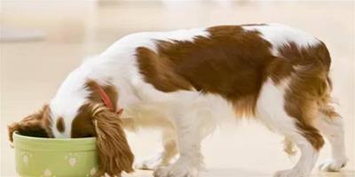 每次喂完狗狗餐具都用刷嗎
