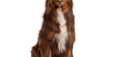 狗狗春天常見疾病 健康生活注意