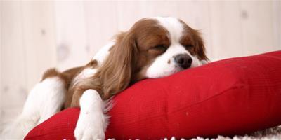 狗狗為什麼喜歡咬人 6大原因導致狗狗咬人