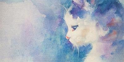 解讀寵物:為什麼貓咪喜歡高處和隱蔽處?