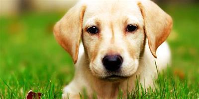 想給老人買狗狗作伴,什麼狗適合老人養呢?