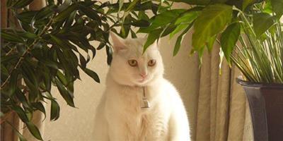 記住讓貓咪遠離家中危險藥物