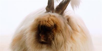 家裡養兔子好不好 家裡怎麼養寵物兔子