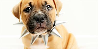 寵物狗放屁 健康問題一次解答