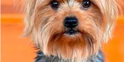 秋天到了,如何預防狗狗感冒???