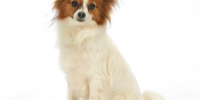 如何一款適合狗狗的香波呢