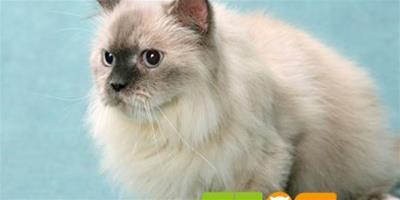 【揭秘】貓咪喜歡什麼樣的環境?