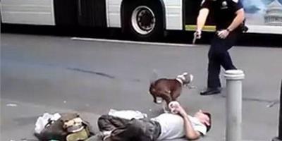 【憤怒】狗狗因員警腳踢癲癇病發的主人狂吠不止,員警竟開槍射殺!