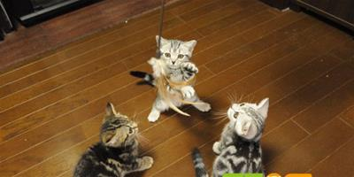 貓咪健康的生理指標