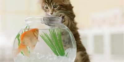 你絕對不知道:家長不能觸碰的貓訓練禁區