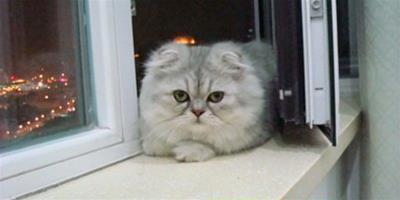 如何才能提高貓咪膽量