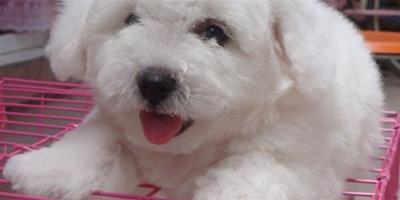領養狗狗需要什麼條件?有哪些流程手續?